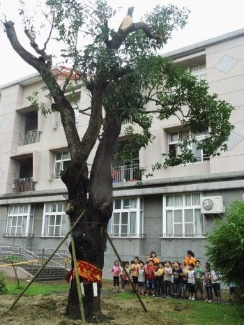 學生代表為老樹綁上祈福絲帶、卡片。(宣信國小提供)