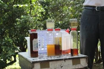 左邊杯子的純正蜂蜜加水後略帶白濁色,右邊合成蜂蜜則是清澈茶色。(緯來提供)