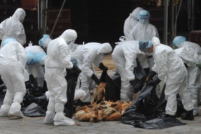 中国H7N9疫情恐升温 湖北又确诊1例