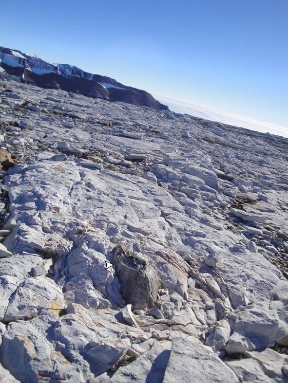 美國堪薩斯大學研究人員去年在南極洲Mount Achernar地區發現了木材和樹葉的化石。(Patricia Ryberg提供)