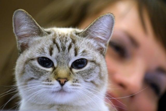 越來越多的證據顯示,動物的確具有諸如幸福、悲傷、憤怒,甚至愛和困窘等高級情感。(AFP)