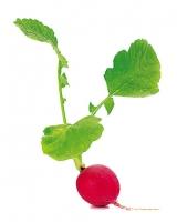 【生活中の解毒食材14】小蘿蔔葉|