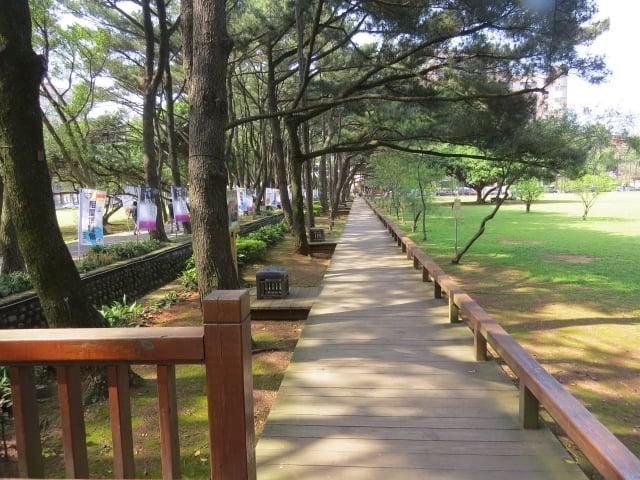 百花川松林步道。(記者陳建霖/攝影)