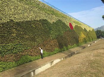 全球最大 岡山綠化植生牆創金氏紀錄