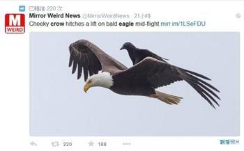 美國男子拍到友愛照片:烏鴉騎老鷹兜風