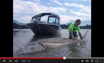 9歲男童釣到272公斤大魚 長3公尺