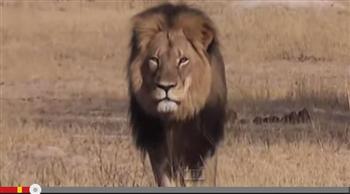 非洲獅王托靈媒傳話:別讓黑暗進入人心