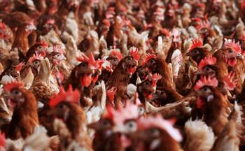 台東陸水禽混養 染H5N2禽流感