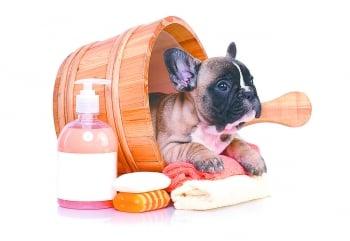 用錯洗毛精 寵物皮脂膜易受損