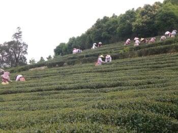 桃園農村再生體驗 培養農的傳人