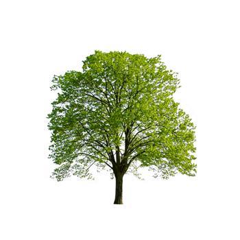 一棵樹有多少葉子 古人真能算出?