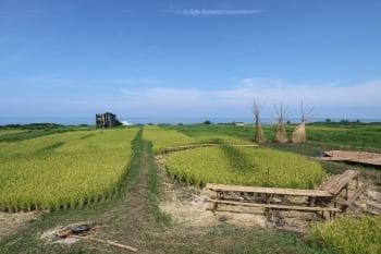 花蓮農改場 打造部落農業亮點