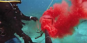 影片:鯊魚不會咬人第二口?他們用自己的血做了實驗!