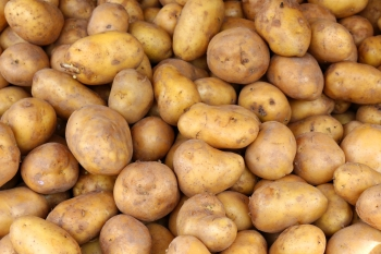【食在地 吃當季】 季節交替吃什麼?百香果、馬鈴薯好入菜