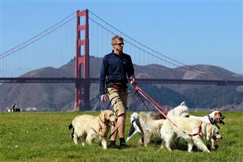 美國男子幫人遛狗 每日5小時年賺11萬美元