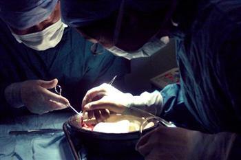 「反對強摘器官醫生組織」獲諾貝爾獎提名