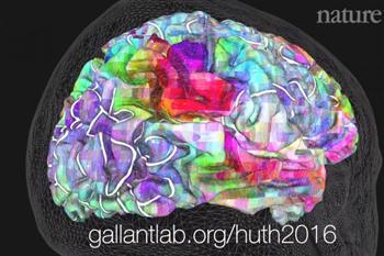 人腦不是左右半球的簡單組合  語言地圖比迷宮複雜萬倍