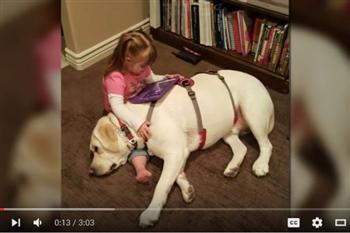 【影片】5英里外感應主人出事 靈犬及時警示救幼主