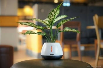 以植物盆栽促進人類溝通 交大團隊獲設計獎