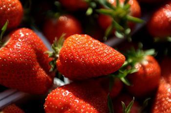 新研究 用蠶絲塗層可保鮮草莓7天