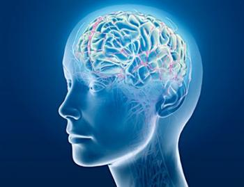 發現大腦皮層100個新功能區!科學家要幾10年才能初步查明各區特點