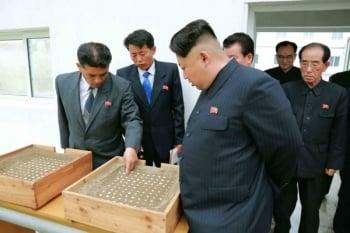 制裁重創北韓 軍人常餓死或內部瓦解