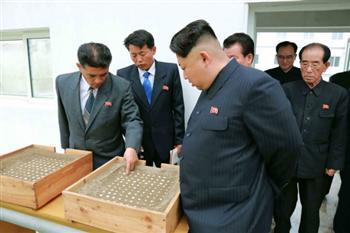 送6萬勞工到海外、每年賺5億美元...日美韓促別接受北韓勞工