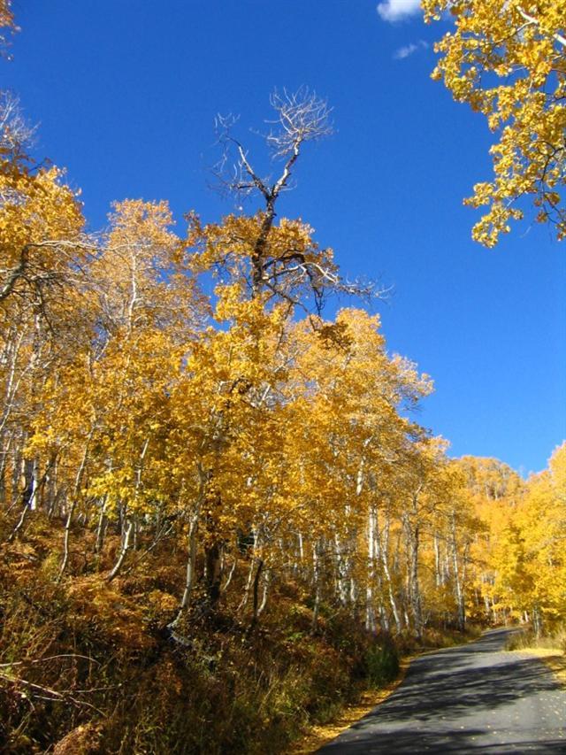 潘多林的風景 (維基百科)