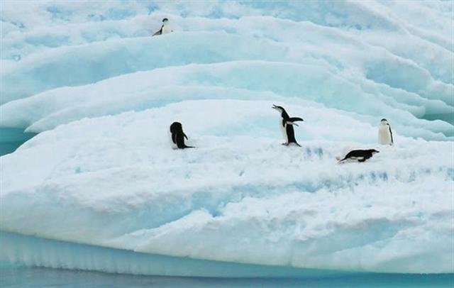 南極洲的企鵝。(pixabay)