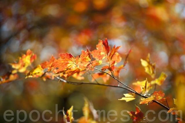 跟著秋天的溫度,跟著秋天的風,跟著秋天的心情 演一齣...秋季戀歌(攝影:戴兵 / 大紀元)