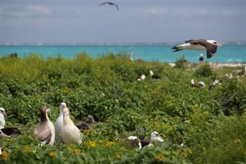 美將設全球最大海洋保護區 擁4500年黑珊瑚