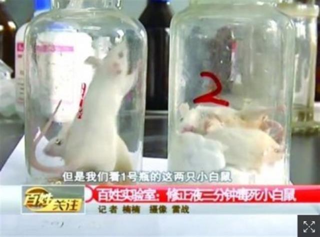 修正液老鼠實驗,圖右是被放在有修正液的老鼠。(網路圖片)