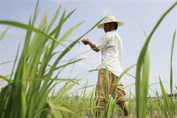 中共想要轉基因食品 但是中國人民不想要