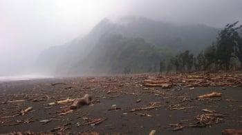 擅自撿拾漂流木恐觸法 打撈海上漂流木應歸還