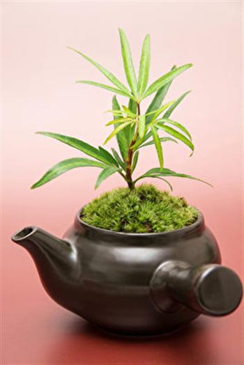 瀉鹽具有良好的強化植物功效。(大紀元圖片)