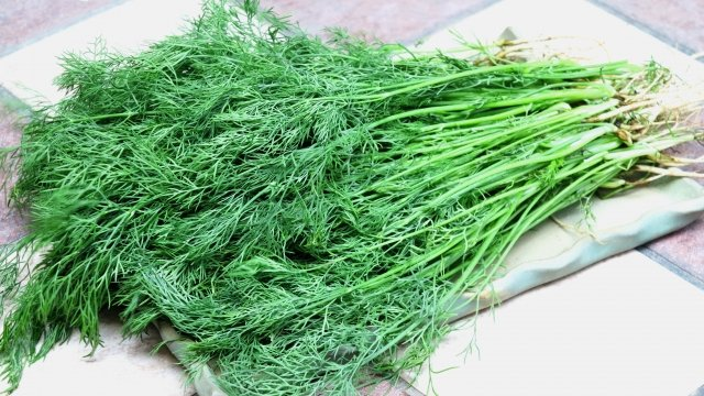 當天氣逐漸涼冷,菜市場裡就會出現一種枝葉細小如針的深綠色蔬菜—茴香仔,又稱小茴香。(攝影/玫玲)