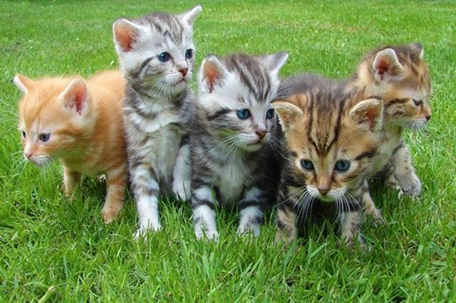 貓科動物能夠回憶美好體驗,例如吃了自己喜歡的點心。(Jan Mallander/pixabay.com)