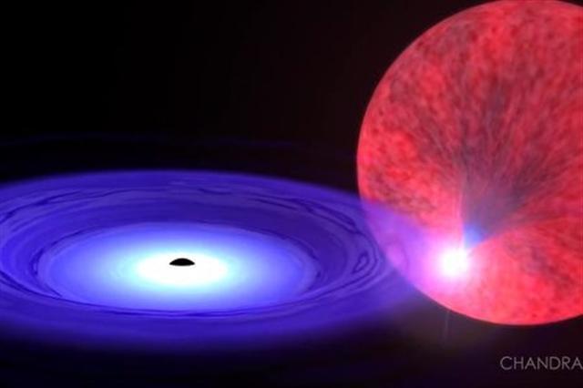 白矮星和黑洞組成雙星系統47 Tucanae X9的示意圖。(錢德拉望遠鏡影片截圖)