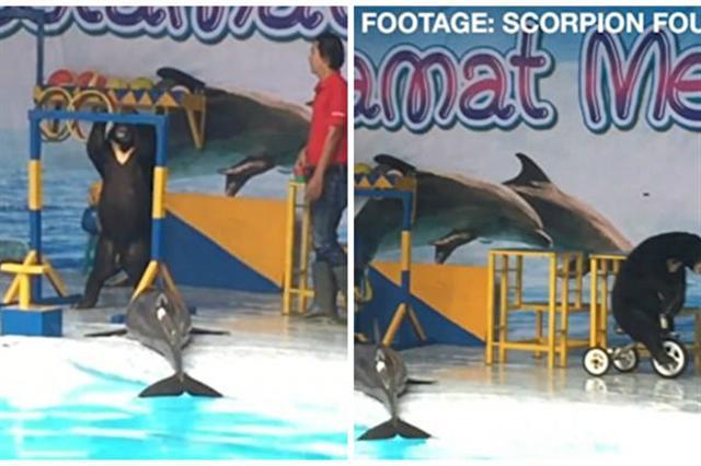 脫水過長時間對海豚有致命危險。而在狗熊耍單槓、騎單車過程中,這隻海豚一直被晾曬一邊。(視頻截圖/大紀元合成)
