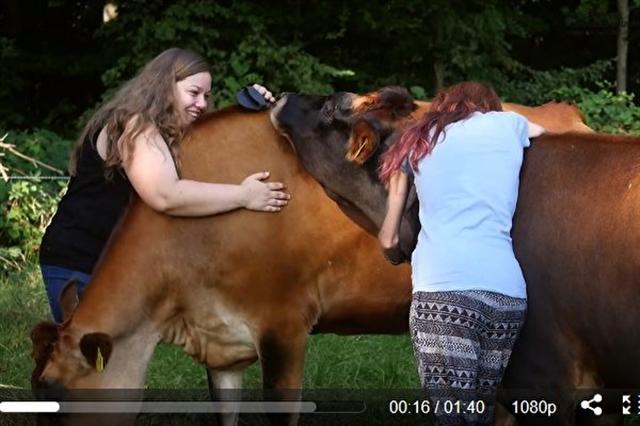 摟抱牛隻據稱有紓解壓力的功效。有些農場提供這樣的服務。(視頻擷圖)