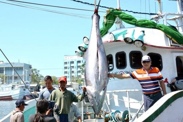 2017屏東黑鮪魚季第一鮪由東港籍漁船「德鴻發號」奪得頭采,24日將在東港魚市場舉辦拍賣會。(屏東縣政府提供)