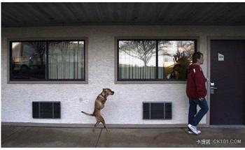 二隻腳的小狗培斯殘而不廢 感動人心