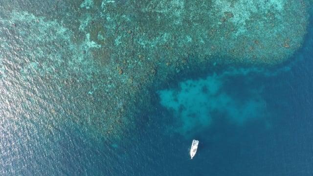 台大研究團隊於2013~2015年,從南海北部的東沙環礁內陸續取得珊瑚樣品,記錄人為排放氮的信號。(中央社)