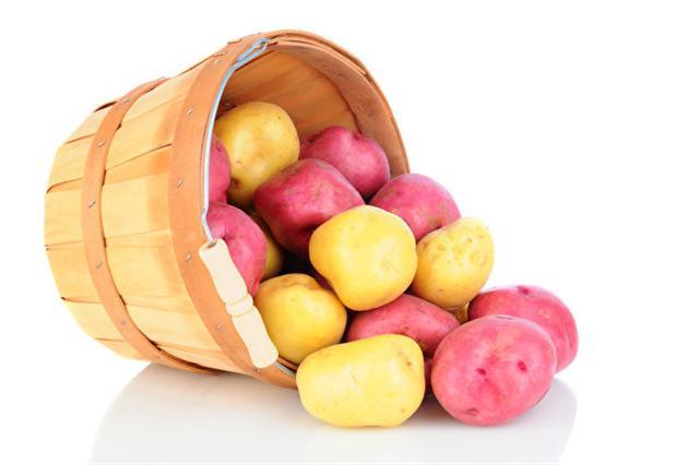 馬鈴薯含有蛋白質、礦物質(磷、鈣等)、維生素等多種成分,有地下蘋果」之稱。(Fotolia)