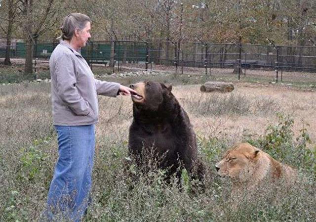 (Noah's Ark Animal Sanctuary: home of the BLT/Facebook)