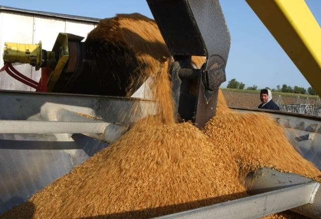 談判十餘年 美國稻米准入大陸