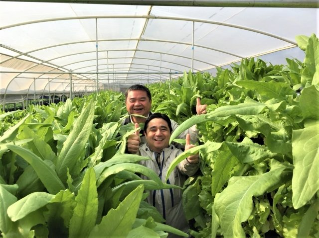 空中田園農業科技溫室。(強靂企業提供)