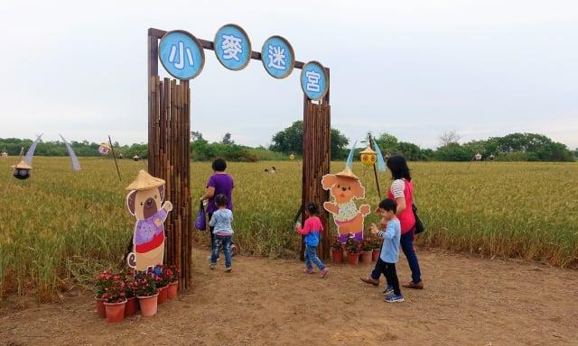 小麥打造的迷宮,讓孩童穿梭在小麥間遊玩。