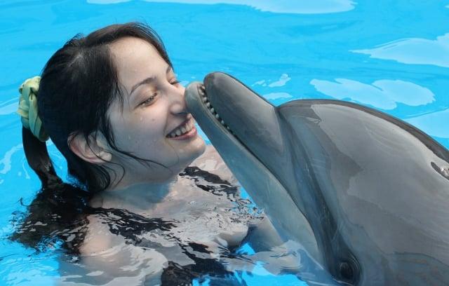 克里米亞烏克蘭政府代表巴賓(Boris Babin)聲稱,烏克蘭先前訓練的間諜海豚遭俄羅斯捕獲後,拒絕聽從俄方命令並絕食至死。圖為克里米亞一處海豚館的海豚。(YURIY LASHOV/Getty Images)