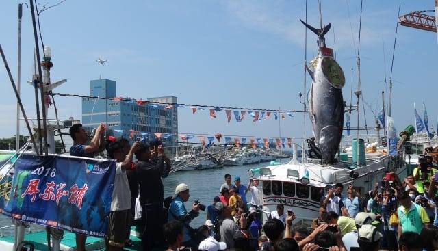 東港籍漁船「魚來滿6號」船長林家瑞所捕獲的「第一鮪」於4月22日上午入港拍賣。